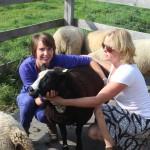 schapen scheren workshop wolvilten Utrecht