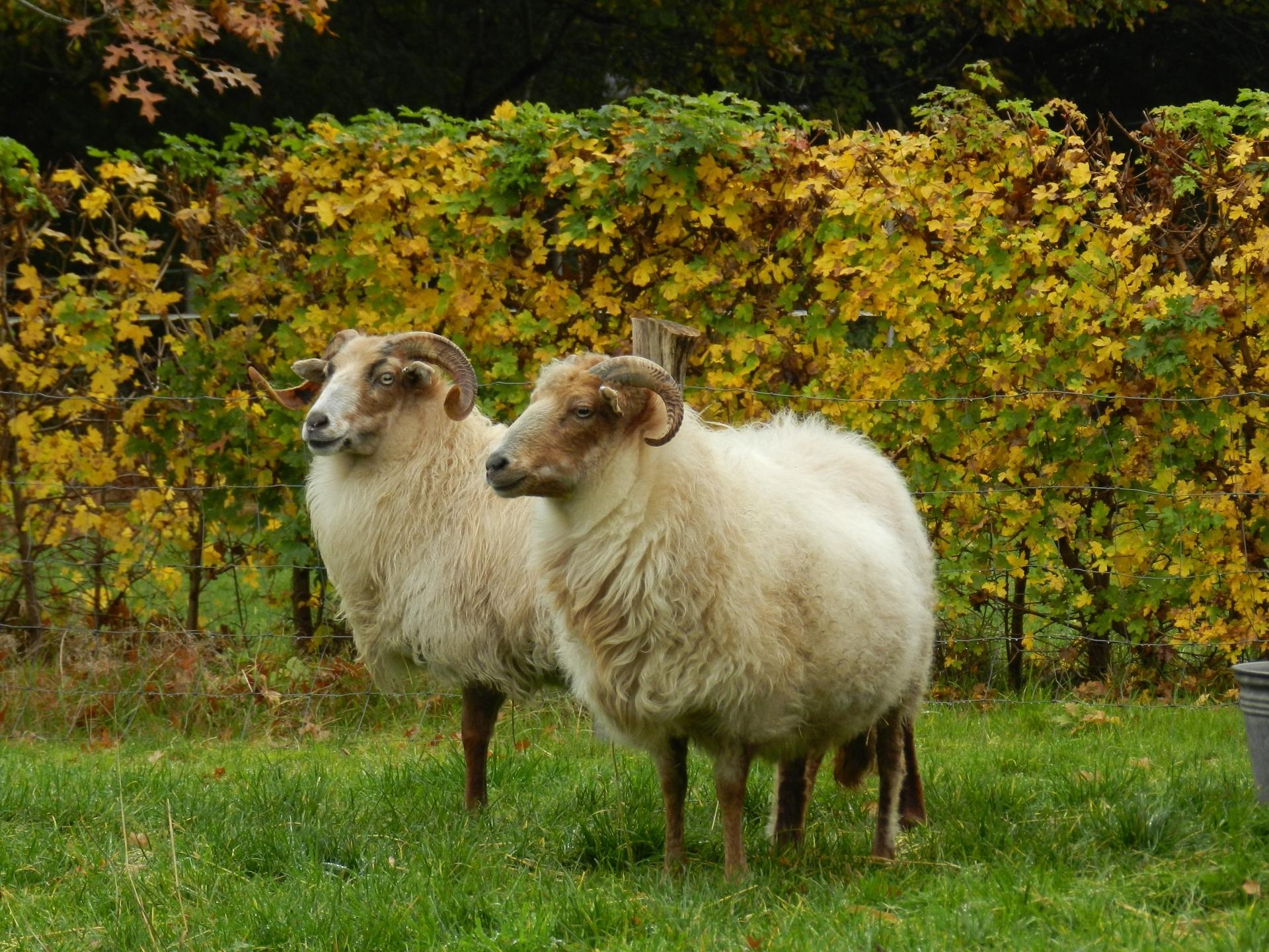 Inspiratie: Struinen tussen de schapen bij landgoed Heidestein